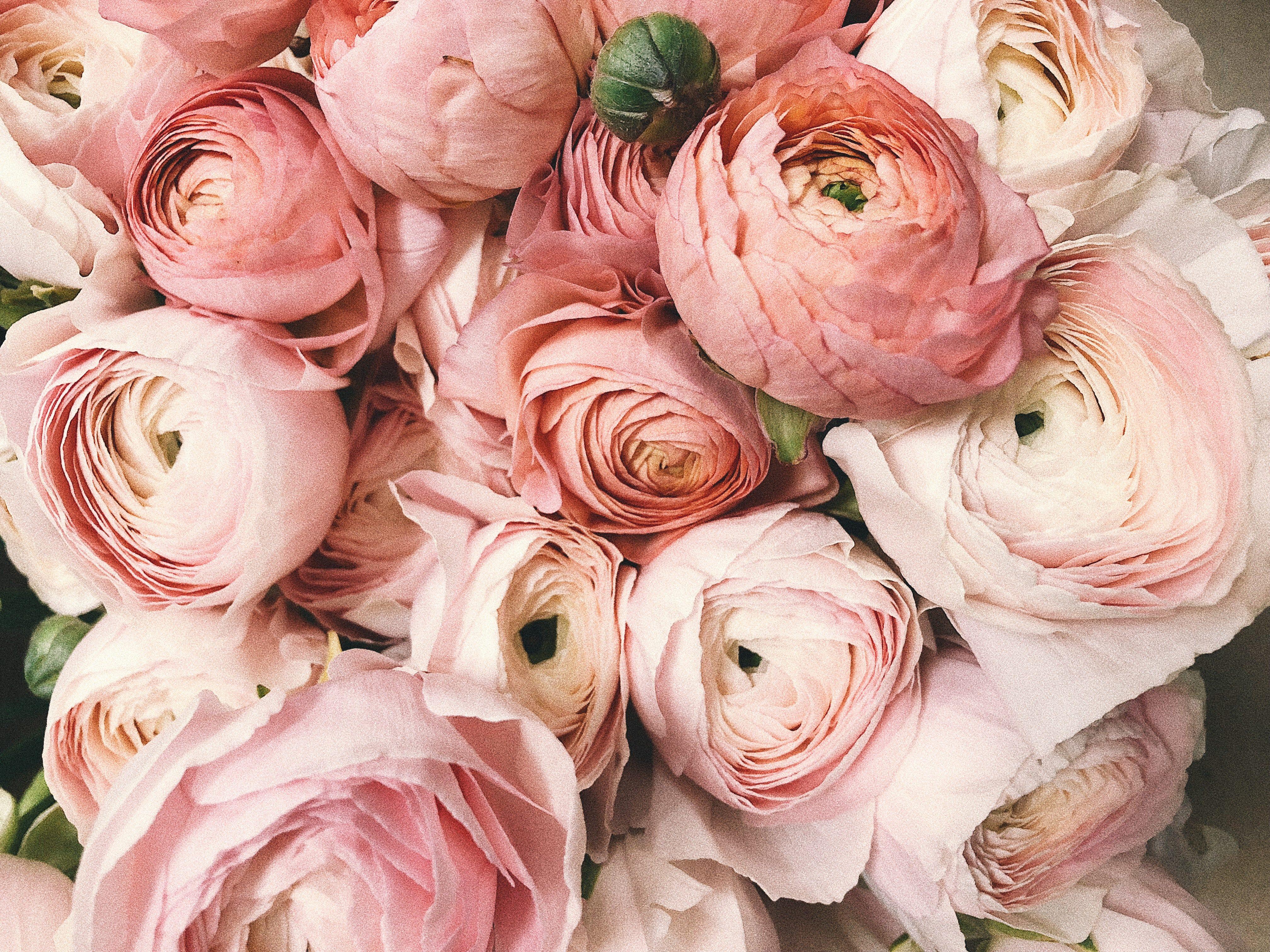 anniversary-beautiful-blooming-931177
